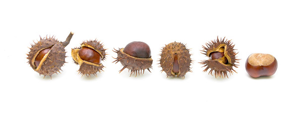 six chestnuts on a white background