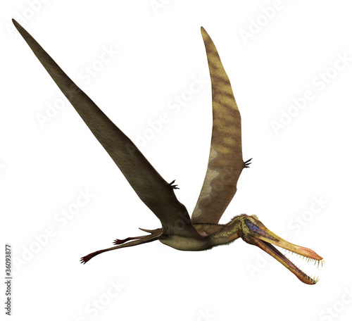Anhanguera Dinosaur in Flight