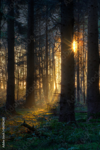 First sunlight in dark forest
