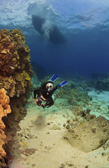 Diver exploring a reef in Kona Hawaii
