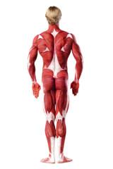 muscle man rear view