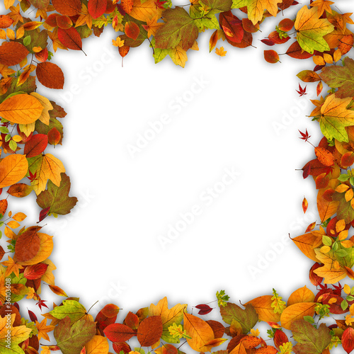 Frame made of autumn leaves.