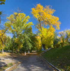 Orange and yellow trees in the park. Autumn