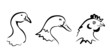 farm birds collection of symbols