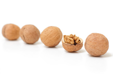 Open walnut in kine with closed nuts. Concept of unique. Focus o
