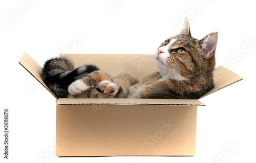 kleine Katze im Pappkarton