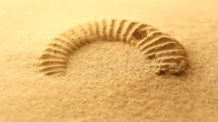 砂に埋もれたアンモナイト