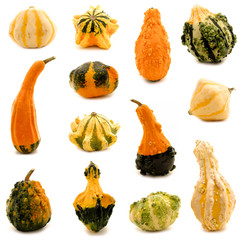 Thirteen unique and colorful autumn gourds