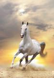 Fototapete Reiten - Equine - Nutztiere