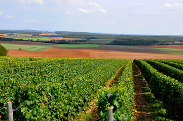Vue sur les vignes du Sancerrois