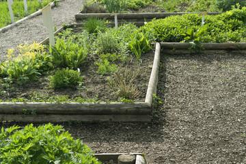 herb garden detail
