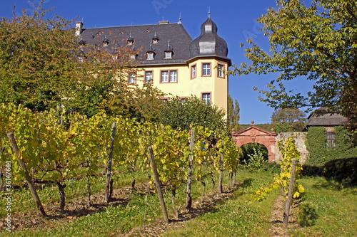 Schloss Vollrads im Rheingau mit Weinstöcken (Hessen)