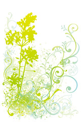 植物イラスト