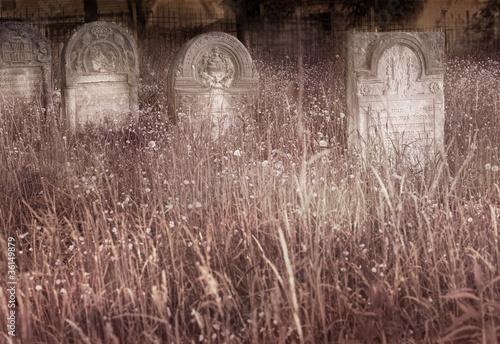 Old Jewish cemetery © malwa