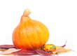 Orange pumpkin on a white background