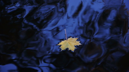HD - Maple leaf is traveling to the waterfall_scene01