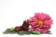 Asternblüten 1