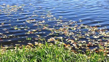 Осень. Опавшие литья на берегу озера