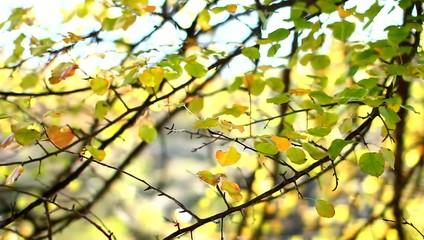 Осенние листья освещенные солнцем