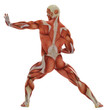 muscle man karate pose back view