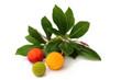 Früchte des Erdbeerbaums freigestellt