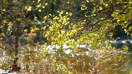 Осень. Ветки с желтыми листьями