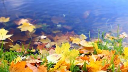 Осенние листья на берегу озера