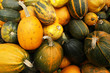 Various type of  pumpkins
