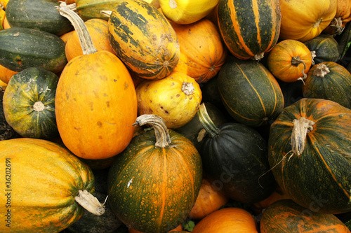 Various type of  pumpkins