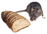 mouse and bread - pests poster