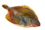 Fresh fishes flounder  on white background poster