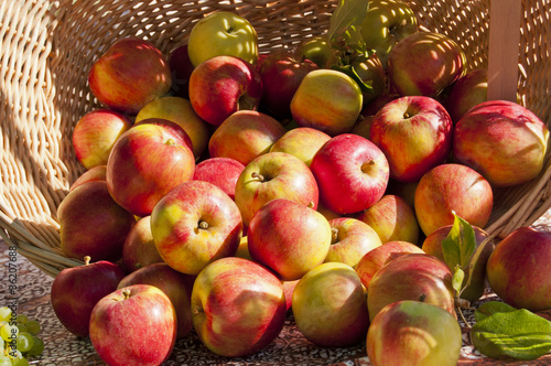 Large basket with red and gold apples spilling out