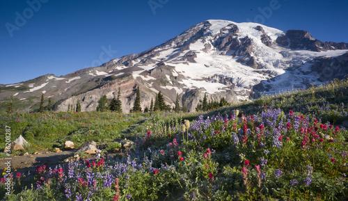 Mt. Rainier Wildflowers Bloom