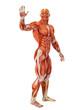 muscle man waving full body
