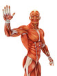 muscle man waving