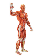 muscle man waving full body