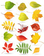 Collection of leaves. Vector illustration