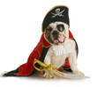 dog pirate