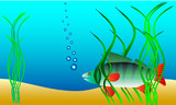 Underwater landscape - perch hiding in the weeds poster