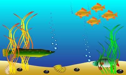Underwater landscape - fish and seaweed