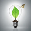 Leaves grow in a light bulb have butterfly