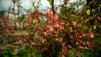 Flowers - Red Blossoms