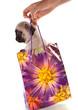 chiot Carlin dans un petit sac