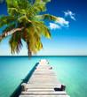 plage vacances cocotier