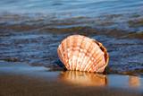 Meer und Sandstrand mit Muschel