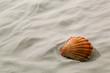 Muschel liegt im Sand am Strand
