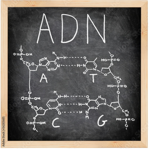 ADN - DNA in Spanish, French and Portuguese.