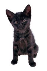 Gattino Nero