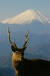 Mt. Fuji and a deer