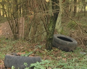 Used tires discarded in the forest. Environmental pollution.